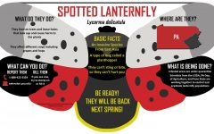 Spotted Lanternfly to Return!