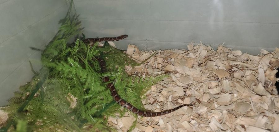 Milky's Mad Dash: Snake Breaks Free at Friends Select
