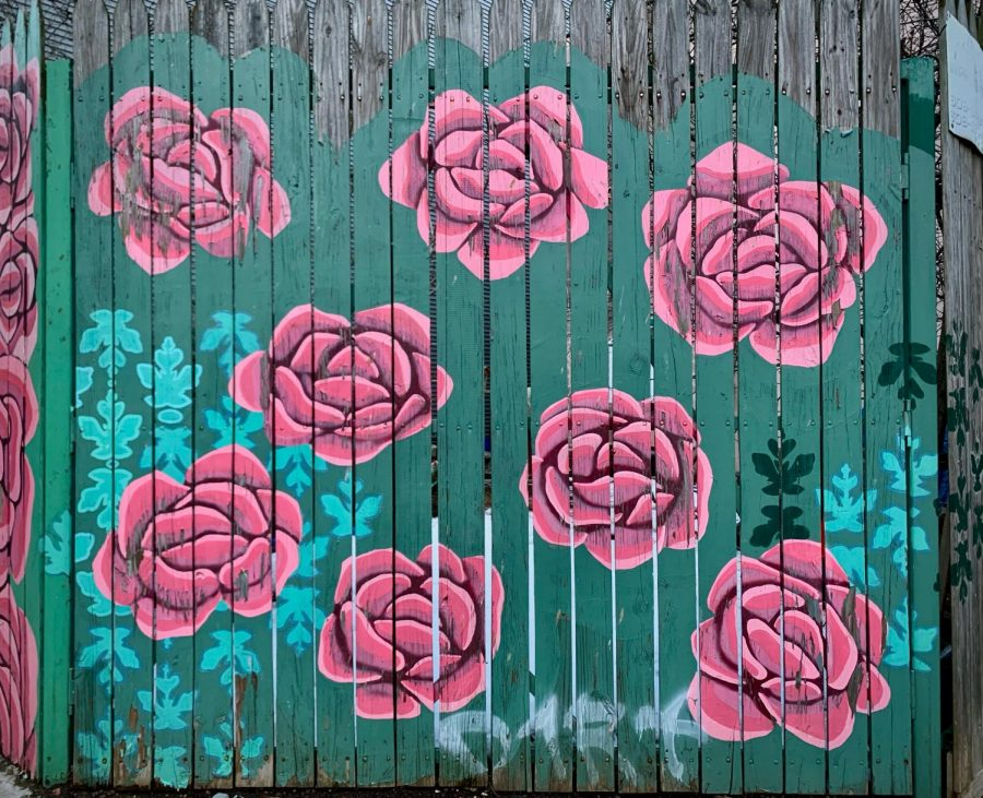 A wooden fence covered in pink flowers and green background. Found on the corner of Wildey St.